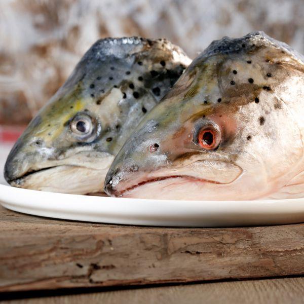 barfgold-fisch-lachskoepfe